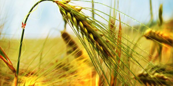 Agri commodity trading companies in india